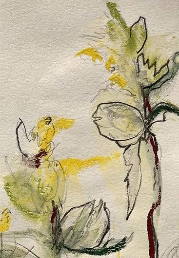 yellow rattle CU pencil + pastel_edited.