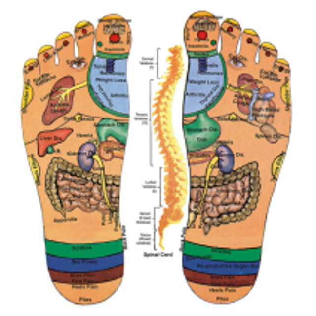 The areas of the feet that correspond to the areas of the body in reflexology.