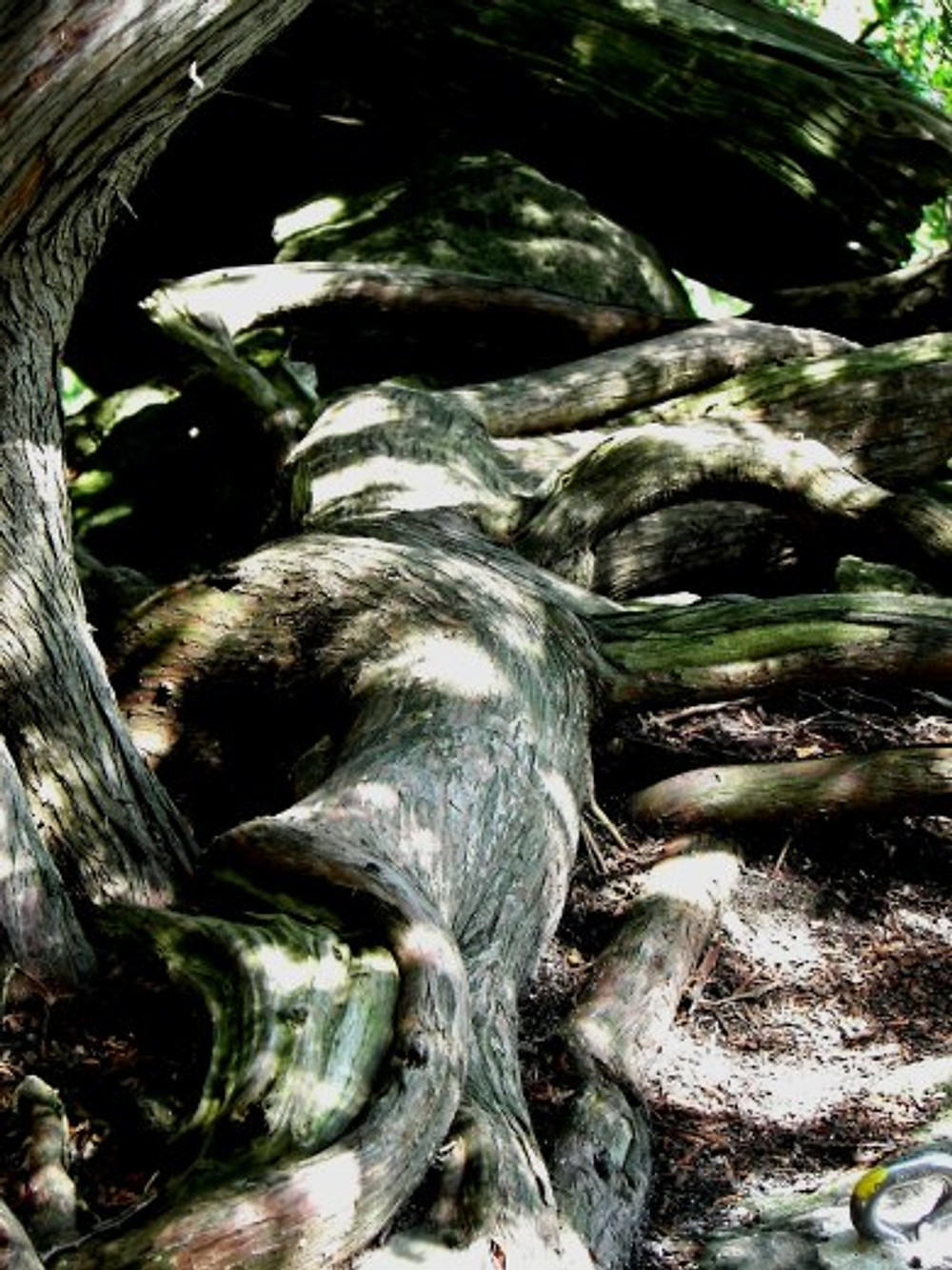 000-wp-salamander-rattlesnake-pt