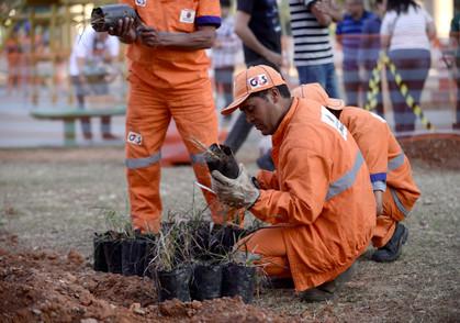 Vila Prudente recebe o plantio de 300 mudas de árvores