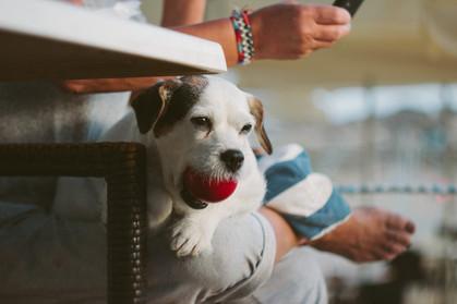 Animais de estimação também podem entrar na guarda compartilhada