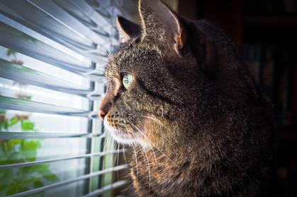 Startup localiza pet shops e veterinários na vizinhança