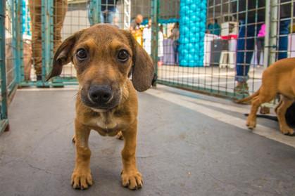MorumbiShopping promove 3ª edição de evento de adoção de animais