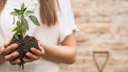 Vila Madalena terá ação de doação de mudas de plantas, neste sábado