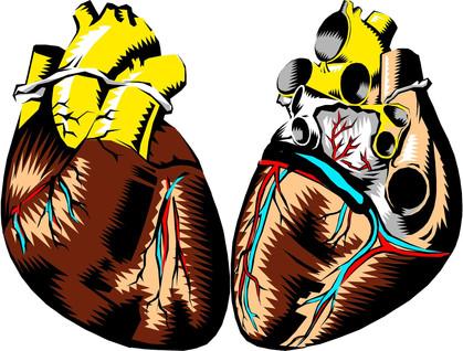 Doação de Órgãos: Saiba como você pode salvar uma vida