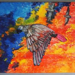 Bird-perroquetgris-ami