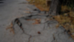root damage.jpg
