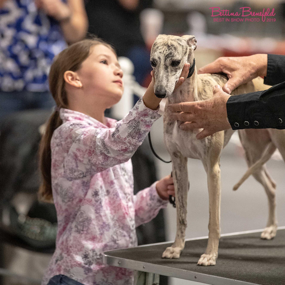 BBP_3886MR-11162019 Whippet Girl.jpg
