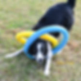 DSC_1109W-NOV2018-Trick-Dog.jpg
