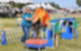 DSC_1706W-NOV2018-Trick-Dog.jpg