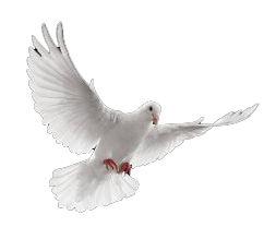 dove white fly.jpg