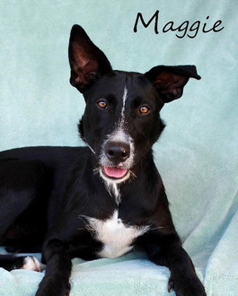 Maggie - Adopted!