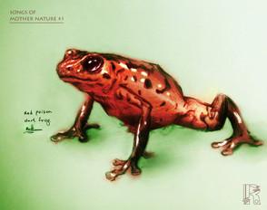 Red Poison Dart frog (SOMN).jpg