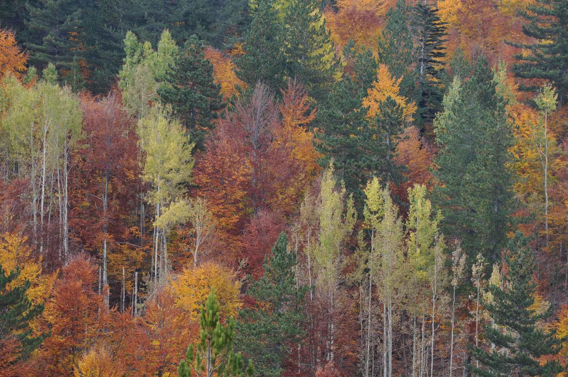 3- E701.  Sila Grande.  Valle di Fallistro. Ph F. Bevilacqua