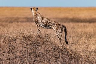 wildlife - ariel medina photography  (31