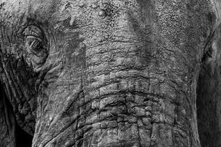 wildlife - ariel medina photography  (6)