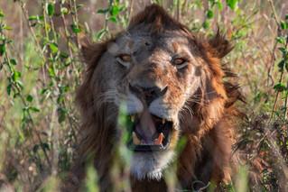 wildlife - ariel medina photography  (16