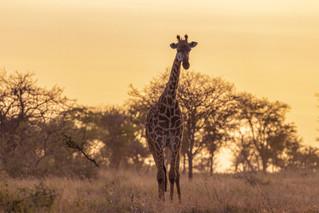 wildlife - ariel medina photography  (19