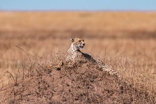 wildlife - ariel medina photography  (30