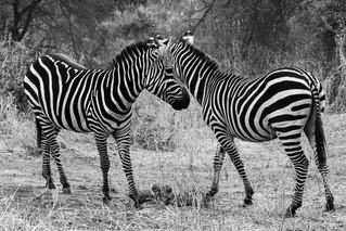 wildlife - ariel medina photography  (9)