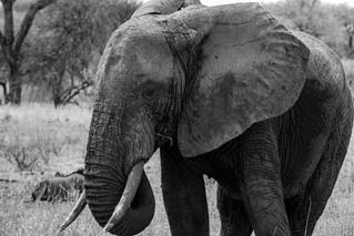 wildlife - ariel medina photography  (7)