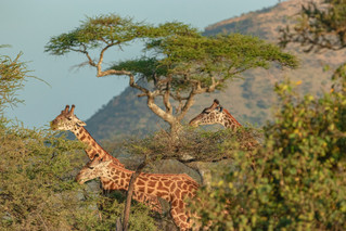 wildlife - ariel medina photography  (21