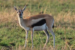 wildlife - ariel medina photography  (26