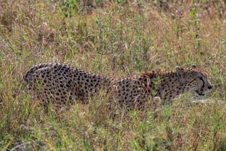 wildlife - ariel medina photography  (29