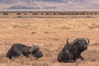 wildlife - ariel medina photography  (35