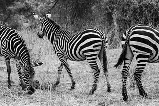 wildlife - ariel medina photography  (10