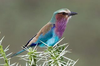 wildlife - ariel medina photography  (14