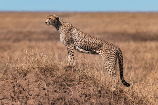 wildlife - ariel medina photography  (32