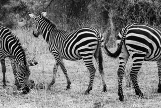 wildlife - ariel medina photography  (11