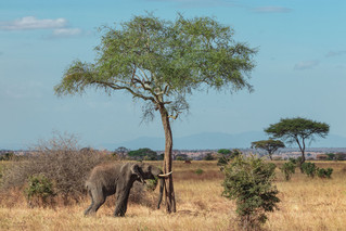 wildlife - ariel medina photography  (12