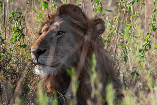 wildlife - ariel medina photography  (15