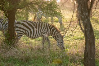 wildlife - ariel medina photography  (23