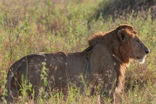 wildlife - ariel medina photography  (18