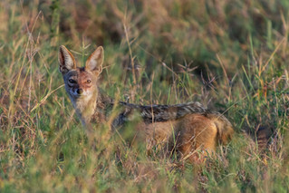 wildlife - ariel medina photography  (24