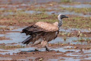 wildlife - ariel medina photography  (41