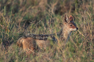 wildlife - ariel medina photography  (25