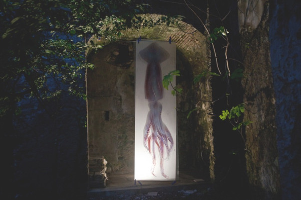 Squid Scantype 2012 copia.jpg