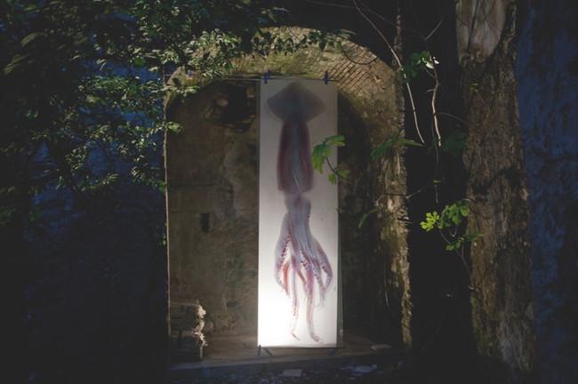 Giant Squid Scantype 2012