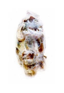 Shuck Oyster 5