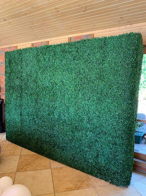 Box hedge wall