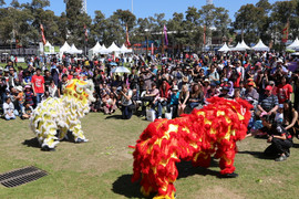 Copy of Performance - Lion Dance during