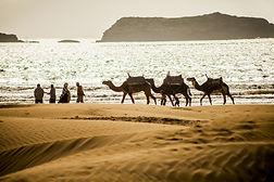 Dromadaire à Essaouira