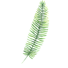 Tropische Blätter 3
