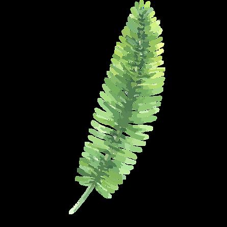 Les feuilles tropicales 3