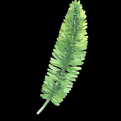 熱帯の葉3