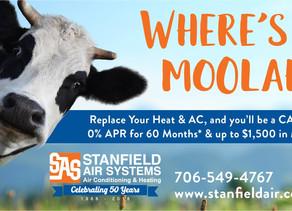 Get some MOOLAH this Spring!